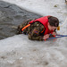 Alaska Army National Guard Command Sgt. Maj. Meehan participates in cold water immersion training