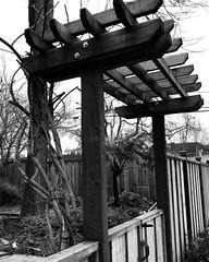 The Berkeley Gate (Melinda * Young) Tags: blackandwhite monochrome new berkeley craftsman asian domestic wood gate fence friday hff