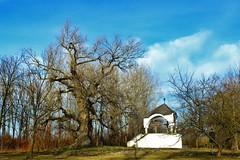 Calvary / Kálvária (Ibolya Mester) Tags: hungary magyarország calvary outdoor blackpoplartree tree ásványráró color colors canon canoneos600d