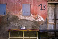 Marrakech | Morocco (chamorojas) Tags: 13 albertorojas cat door facade marrakech marruecos medina morocco street streetcat streetphotography texture zoco chamorojas