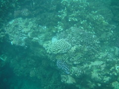 Snorkeling (Rckr88) Tags: pointeauxbiches mauritius pointe aux biches sea water ocean coastline coastal coast coralreef corals reefs reef snorkelling snorkel fish nature naturalworld outdoors travel travelling