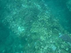 Underwater (Rckr88) Tags: pointeauxbiches mauritius pointe aux biches sea water ocean coastline coastal coast coralreef corals reefs reef snorkelling snorkel fish nature naturalworld outdoors travel travelling