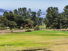 Morro Bay Golf Course 01 (davidseibold) Tags: america california morrobaygolfcourse morrobaystatepark pacificocean sanluisobispocounty usa unitedstates golfcourse jfflickr photosbydavid plant postedonflickr saltwater sandspit sky tree water
