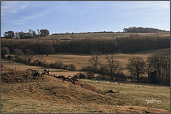 A Sunny Winters Day. (Picture post.) Tags: landscape nature green winter sheep log hills trees bluesky paysage arbre sunlight shadows