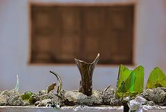 Serenata prohibida (Blas Torillo) Tags: casitas veracruz méxico mexico botellas bottles botellasquebradas brokenbottles vidrio glass muro wall defensa defense protección protection ventana window foco enfoque sharpfocus color colores exteriores outdoors fotografíaprofesional professionalphotography fotógrafosmexicanos mexicanphotographers nikon d5200 nikond5200 fotografíaenlacalle streetphotography