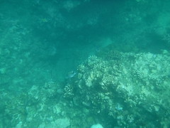 Fish (Rckr88) Tags: pointeauxbiches mauritius pointe aux biches sea water ocean coastline coastal coast coralreef corals reefs reef snorkelling snorkel fish nature naturalworld outdoors travel travelling