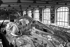 Galerie de paléontologie et d'anatomie comparée (just.Luc) Tags: skeletons skeletten squelettes bn nb zw monochroom monotone monochrome bw parijs parigi paris îledefrance france frankrijk frankreich francia frança museum museo musée museet museu europa europe