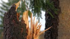 - Sabine war es - (HOR-BS 696) Tags: berndsontheimer badenwürttemberg horbs696 schwarzwald holz sturmholz wald