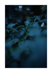 This work is 2/18 works taken on 2020/1/5 (shin ikegami) Tags: sony ilce7m2 a7ii sonycamera 50mm lomography lomoartlens newjupiter3 tokyo 単焦点 iso800 ndfilter light shadow 自然 nature naturephotography 玉ボケ bokeh depthoffield art artphotography japan earth asia portrait portraitphotography