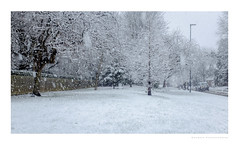 The forecast is for gridlock (G. Postlethwaite esq.) Tags: fujix100t snow unlimitedphotos outdoor photoborder trees winter