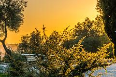 #belém #sunset (PhotographLisbon) Tags: cidade belém photographlisbon city color colour horizontal golden europa europe continental final hora historical histórica dourada côr trees urban portugal landscape lisboa lisbon hour urbana tarde árvores lx