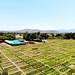 Forage germplasm regeneration site in Zwai