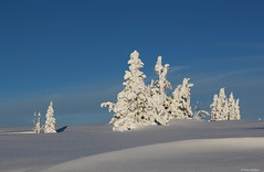 Winter memory (irene.holmen) Tags: winter snø blue white memory vinter snow trees tre trær weather untouched landscape nature outdoor evening light lys mood mountain fjell norway scandinavia