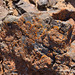 DSC06124 Namibia L4 Flechten