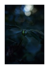 This work is 1/18 works taken on 2020/1/5 (shin ikegami) Tags: sony ilce7m2 a7ii sonycamera 50mm lomography lomoartlens newjupiter3 tokyo 単焦点 iso800 ndfilter light shadow 自然 nature naturephotography 玉ボケ bokeh depthoffield art artphotography japan earth asia portrait portraitphotography