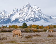 Golden Days (laura's Point of View) Tags: autumn fall seasons mountain mountains tetons grandteton rockymountains snow color pasture horse equine ranch wilderness moran jacksonhole wyoming unitedstates west western landscape grandtetonnationalpark findyourpark nationalpark lauraspov lauraspointofview