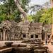 2019 - Cambodia - Siem Reap - Ta Prohm - 10