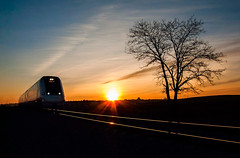 Train / Tren (JMT Photo & Edition) Tags: tren train sunset atardecer backlight backlit contraluz dawn amanecer puestadesol arbol árbol tree rail