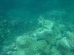 Underwater Worlds (Rckr88) Tags: pointeauxbiches mauritius pointe aux biches sea water ocean coastline coast coastal coral coralreef corals reefs reef snorkel snorkelling marinelife marine fish underwater nature naturalworld worlds underwaterworlds underwaterworld world