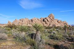 Jumbo Rocks - Joshua Tree National Park, California (russ david) Tags: california jumbo rocks joshua tree national park ca landscape travel april 2019 desert