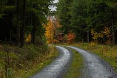 Unser Wald  (30) (berndtolksdorf1) Tags: deutschland thüringen wald bäume laub färbung jahreszeit herbst weg outdoor