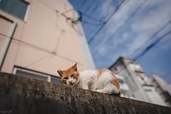 猫 (fumi*23) Tags: ilce7rm3 sony sel24f14gm fe24mmf14gm emount 24mm a7r3 animal alley cat chat gato neko bokeh dof 猫 ねこ ソニー