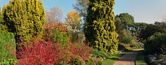 Photo of cambridge botanical garden winter garden