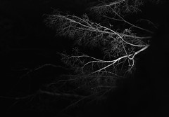 Winter Memories (Golden Ginkgo) Tags: lightandshadows nightshots abstract trees nature