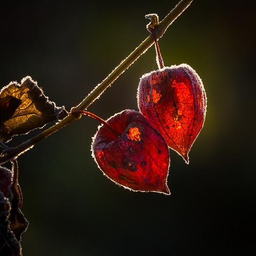A Valentine cheek to cheek