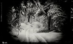 O hold Thou (Crusty Da Klown) Tags: canada britishcolumbia bc trail path snow winter tracks trees forest wilderness nature bw black white monochrome outside outdoors adventure vignette film canon fujifilm okanagan mountain provincial park