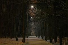Moscow. Night in Izmailovo (dardashew) Tags: moscow izmailovo izmailovskypark night lights trees forest path snow landscape nightscape dardashew february winter dmitryardashev