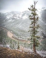 Tree 🌲 (Somewhere in the Mountains) Tags: canada alberta landscape hiking snow trees mountains nature