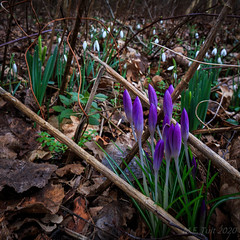 Spring is in the air @ the woods