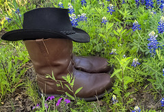 Shortest Cowboy in Texas 3 (Largeguy1) Tags: approved shortest cowboy texas canon 5d mark iii macro wildflowersinllano bluebonnetsinllano