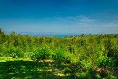 Forest above Srinakarin lake in Kanchanaburi province, Thailand (UweBKK (α 77 on )) Tags: kanchanaburi province thailand southeast asia sony alpha 77 slt dslr tree forest srinakarin lake water landscape view scenery scenic scene sky nature outdoors