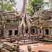 2019 - Cambodia - Siem Reap - Ta Prohm - 11