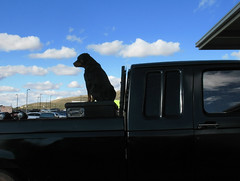 (brew4ice) Tags: dog pickup truck silhouette