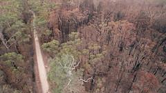Fire edge (OzzRod) Tags: dji phantom3advanced quadcopter drone fc300s207mmf28 bushfire burned forest aerial currowan bendalong nswsouthcoast