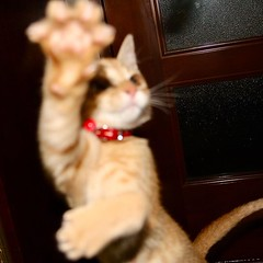 I know she can dance. #cat #猫 #ネコ #ねこ #野良猫 #alleycat #Straycat #流浪猫 #Gatocallejero #Chaterrant #????? #Katze #chat #gatto #gato #feles #кошка #KAT #gato #??? #ko?ka #kass #муур #pisic? #Tokyo #日本 #東京 #Japan #ivvaDOTinfo