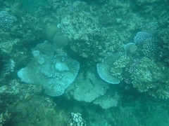 Tropical Coral Reefs (Rckr88) Tags: pointeauxbiches mauritius pointe aux biches sea water waves wave ocean coast coastline coastal fish marine marinelife underwater snorkel snorkelling coral coralreef corals reefs reef nature naturalworld