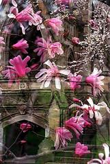 "Cincinnati - Spring Grove Cemetery & Arboretum ""Star Kobus Over Dexter Mausoleum"" Double Exposure (David Paul Ohmer) Tags: cincinnati ohio spring grove cemetery arboretum double exposure star kobus dexter mausoleum"