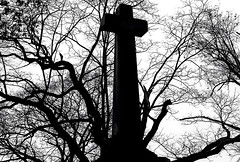 "Cincinnati - Spring Grove Cemetery & Arboretum ""Branching Out"" (David Paul Ohmer) Tags: cincinnati ohio spring grove cemetery arboretum branches cross silhouetted"