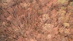 We're still standin' ... (OzzRod) Tags: dji phantom3advanced quadcopter drone fc300s207mmf28 bushfire burned forest aerial currowan bendalong nswsouthcoast