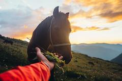 my horse (showpx) Tags: horse лошадь закат алтай никон рука hand sunset summer sun kodak nikon sigma sigma35