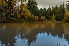 Herbst am Teich  (5) (berndtolksdorf1) Tags: deutschland thüringen landschaft landscape teich wald jahreszeit herbst bäume outdoor