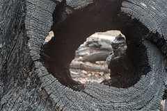 Cut and burned (OzzRod) Tags: pentax k1 zenitarm50mmf17 зенитарм bushfire fireground currowanfire bendalong nswsouthcoast