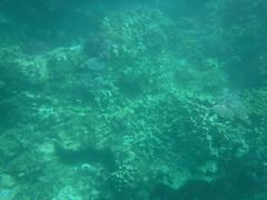 Underwater (Rckr88) Tags: pointeauxbiches mauritius pointe aux biches sea water ocean coastline coastal coast coral coralreef corals reefs reef fish marine marinelife underwater snorkel snorkelling nature naturalworld