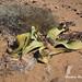 DSC06135 Namibia L4