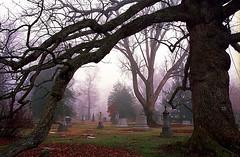 """Cincinnati - Spring Grove Cemetery & Arboretum """"Old Oak Tree Frame"""" (David Paul Ohmer) Tags: cincinnati ohio spring grove cemetery arboretum old oak tree"""