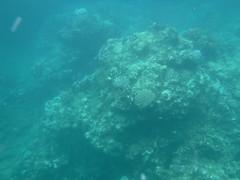 Coral (Rckr88) Tags: pointeauxbiches mauritius pointe aux biches sea water waves wave ocean coast coastline coastal fish marine marinelife underwater snorkel snorkelling coral coralreef corals reefs reef nature naturalworld